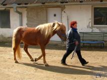 Zkousky_koni_EPONA_10_2011 (9)