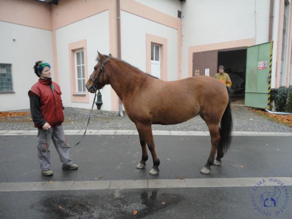 Zkousky_koni_Lecebna_Kosumberk_09_2012 (11)