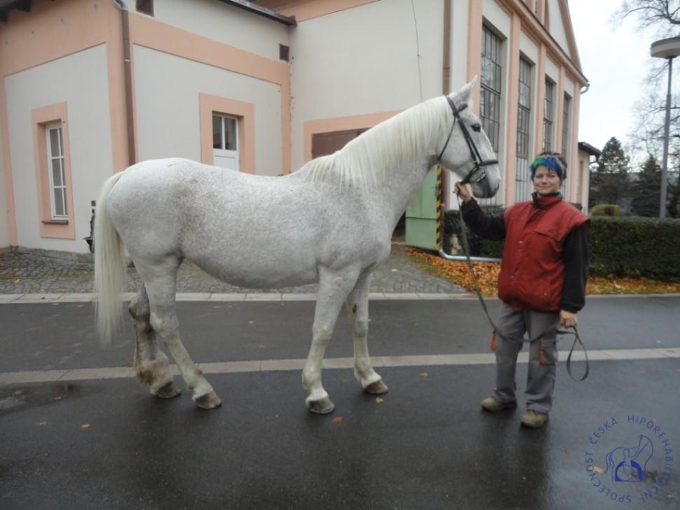 Zkousky_koni_Lecebna_Kosumberk_09_2012 (12)