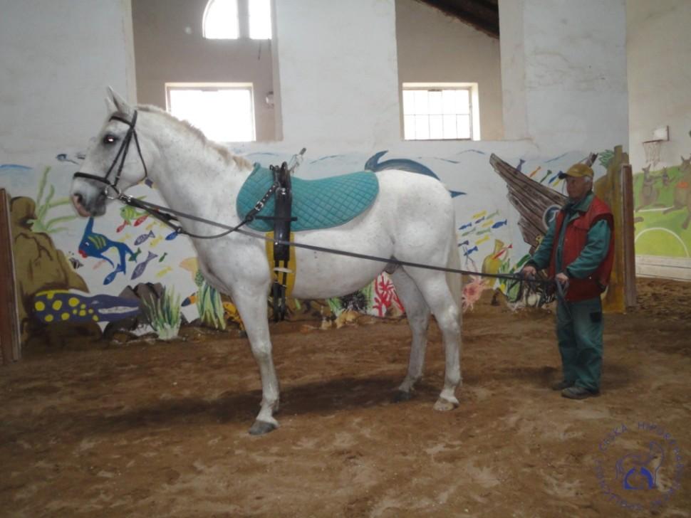 Zkousky_koni_Lecebna_Kosumberk_09_2012 (16)