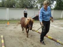 zkousky_koni_PL_Jihlava_07_2012 (39)