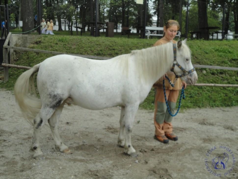 zkousky_koni_PL_Jihlava_07_2012 (43)
