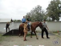 zkousky_koni_PL_Jihlava_07_2012 (5)