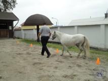 zkousky_koni_PL_Jihlava_07_2012 (54)